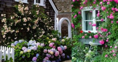 GARDENING IDEAS OF FLOWERS ARE NOT MANY